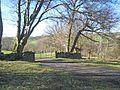 Beech trees in winter - geograph.org.uk - 358676.jpg