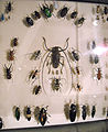 Beetlemania at New Orleans Insectarium.jpg