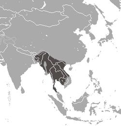 Distribución del loris lento de Bengala