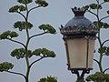 Betancuria - panoramio - mroszewski.jpg