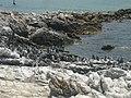 Betty's Bay, 7141, South Africa - panoramio.jpg