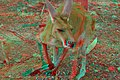 Big Red Kangaroo 4K3D.jpg