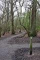 Big Wood - geograph.org.uk - 838491.jpg