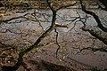 Bigbury, River Avon - geograph.org.uk - 632487.jpg