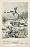 Bird-life; a guide to the study of our common birds (1899) (20383512205).jpg