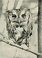 Bird-lore (1920) (14750465062).jpg