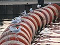 Bird Buoys - geograph.org.uk - 1100024.jpg