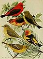 Bird lore (1918) (14755208705).jpg