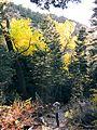 Birder, Mosca Pass Trail (22324011132).jpg