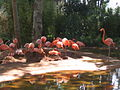 Birds at Barcelona zoo - 2006.JPG