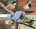 Birdwatching sample.jpg