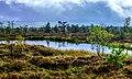Black Moor with Moorauge.jpg