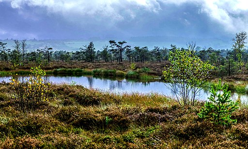 Schwarzes Moor (UNESCO-Biosphärenreservat Rhön). Black Moor with Moorauge