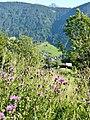 Blick Richtung Kristbergsattel über das Klostertal - panoramio.jpg