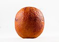 Blood orange on white.jpg