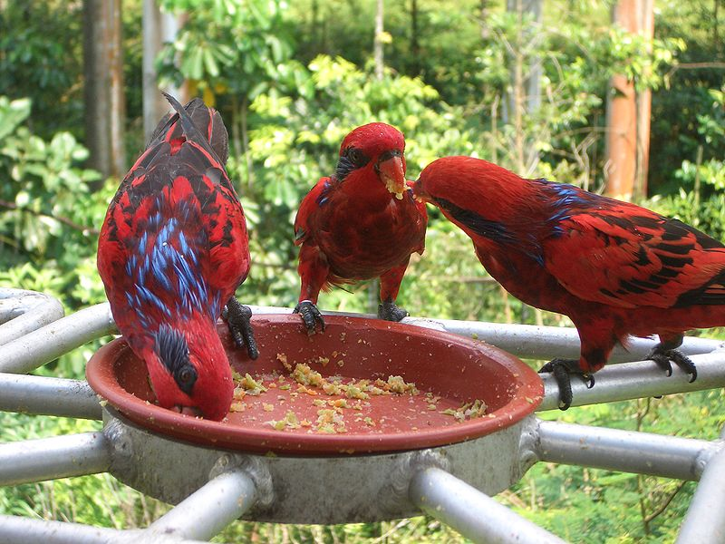 Mate Aggression in Parrots - Why Parrots Fight with their