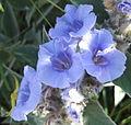 Blue (5669953820).jpg