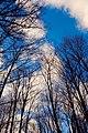 Blue Skies (4192154780).jpg