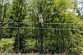 Bluebird trail at Sky Meadows State Park (14353945736).jpg