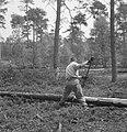 Bosbewerking, arbeiders, boomstammen, werkzaamheden, Bestanddeelnr 251-7856.jpg