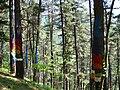 Bosque de Oma (7).JPG