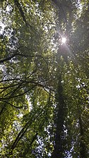 Bosque en galería Sierra Norte.jpg