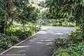 Botanic Gardens In Glasnevin (Dublin) (7951817098).jpg