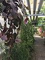 Botanische tuinen Utrecht 67.jpg
