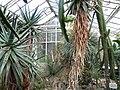 Botanischer Garten Gießen 01.JPG