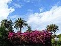 Bougainvillea-Taormina-Sicilia-Italy-Castielli CC0 HQ - panoramio.jpg