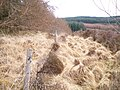 Boundary fence in North Otter Forest - geograph.org.uk - 1706564.jpg