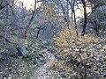 Boynton Canyon Trail, Sedona, Arizona - panoramio (54).jpg