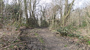 Bramley Bank - Path in Bramley Bank