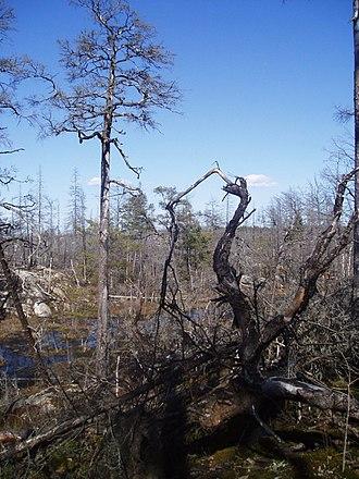 Tyresta National Park - Image: Brand tyresta 1
