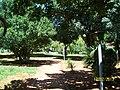 Brasilia DF Brasil - Clinica Renascer - panoramio (6).jpg