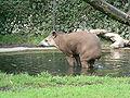 Brazilian tapir zoo hamburg.JPG