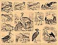 Brockhaus and Efron Encyclopedic Dictionary b17 042-1.jpg
