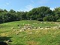 Bronx Zoo - NY - USA - panoramio (9).jpg