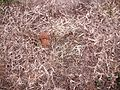 Brown dead grass weeds and leaves.jpg