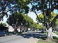 Burlingame city of trees.JPG