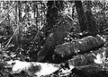COLLECTIE TROPENMUSEUM Ruïne in het bos bij de rubber- en theeplantage Goenoeng Manik omgeving Lampegan TMnr 60016457.jpg