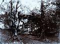 COLLECTIE TROPENMUSEUM Weg in kampong Tjiteureup TMnr 60016548.jpg