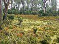 CSIRO ScienceImage 11380 Cradle Mountain Tasmania.jpg