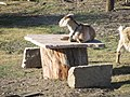 Cabras - panoramio (1).jpg