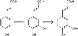 Caffeic acid - In plants, caffeic acid (middle) is formed from 4-hydroxycinnamic acid (left) and is transformed to ferulic acid.