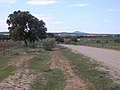 Camino a Trujillanos - panoramio.jpg