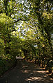 Canopied Ricking Road Wicken Bonhunt Essex England.jpg