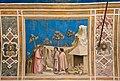 Capella degli Scrovegni (Padova) jm56710.jpg