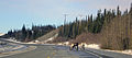 Caribou on the Parks Highway.jpg