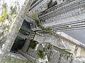 Cathédrale de Chartres, arcs-boutants 02.JPG
